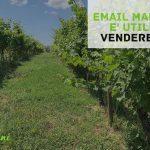 email-marketing-vendere-vino